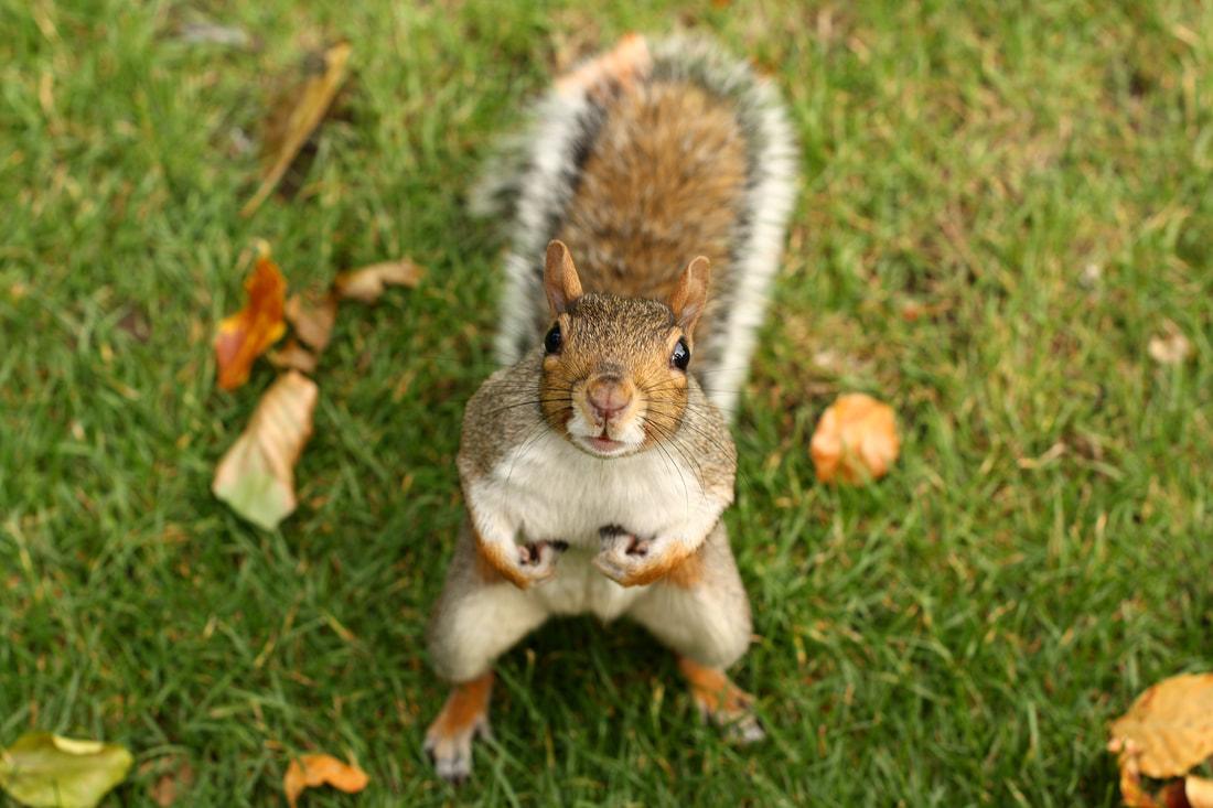 Squirrels & Trees, Love & Hate.